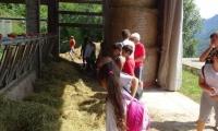 42-nella-bella-fattoria-768x1024